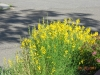 Bright Plant